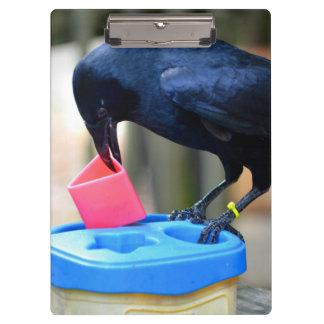 black crow putting shape in toy smart bird clipboard