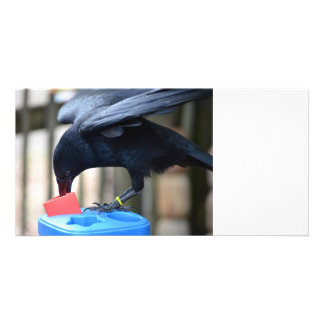 black crow shape sorting kids toy photo cards