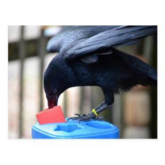 black crow shape sorting kids toy postcard