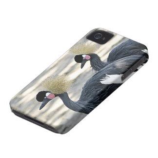 Black Crowned Crane iPhone 4 Case