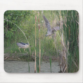 Black-Crowned Night-Heron Adult and Young Mousepad