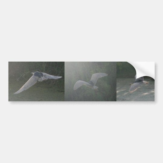 Black-Crowned Night-Heron bumper sticker
