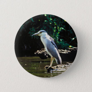 Black-crowned night heron button