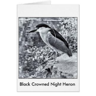 Black Crowned Night Heron Stationery Note Card