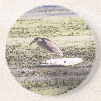 Black-crowned Night-Heron Drink Coaster