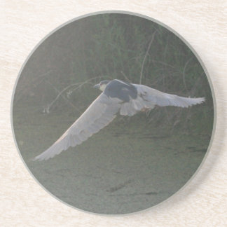 Black-Crowned Night-Heron Coaster