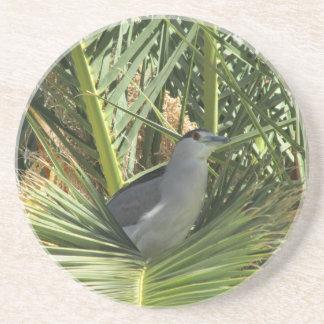 Black-Crowned Night Heron Coaster