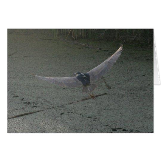 Black-Crowned Night-Heron Flying Card