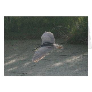Black-Crowned Night-Heron Flying Card 2