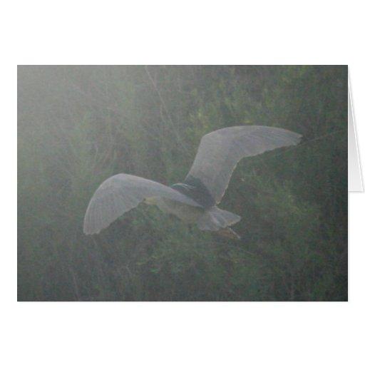 Black-Crowned Night-Heron Flying Card 5