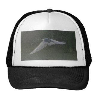 Black-crowned Night-heron hat