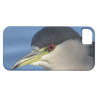 Black Crowned Night Heron iPhone 5 Case