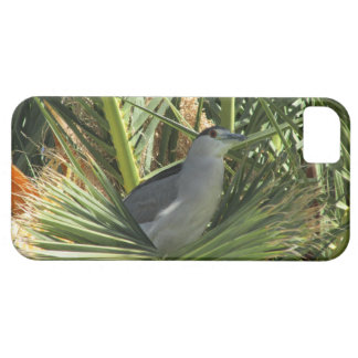 Black-Crowned Night Heron iPhone 5 Case