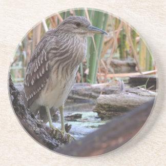 Black Crowned Night Heron Juvenile Coaster