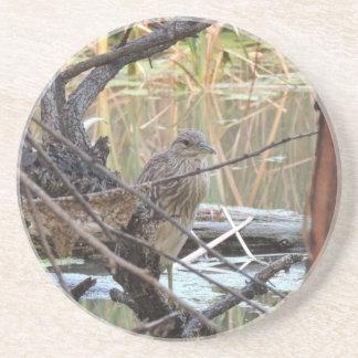 Black Crowned Night Heron Juvenile Beverage Coaster