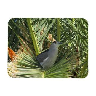 Black-Crowned Night Heron Magnet