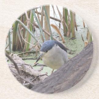 Black Crowned Night Heron Male Coasters