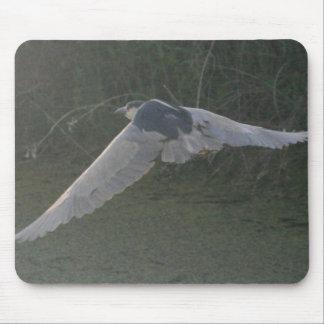 Black-Crowned Night-Heron Mouse Pad