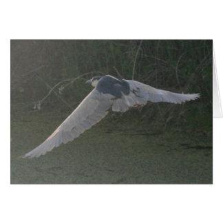 Black-Crowned Night-Heron Notecard Greeting Card