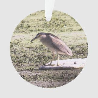 Black-crowned Night Heron Ornament