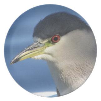 Black Crowned Night Heron Plate