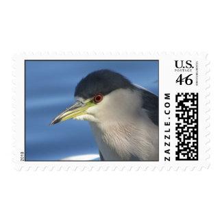 Black Crowned Night Heron Postage Stamp