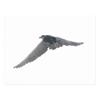 Black-Crowned Night-Heron Postcard