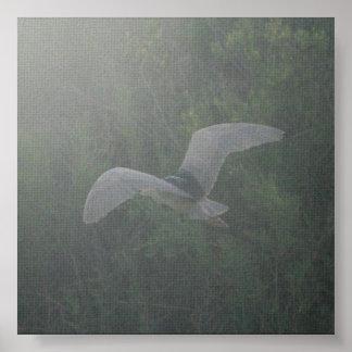 Black-Crowned Night-Heron Poster