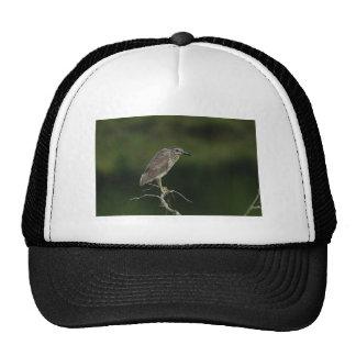 Black Crowned Night Heron Trucker Hats