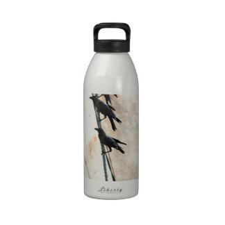 Black crows on fishing boat sail drinking bottles