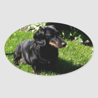 Black dachshund oval sticker