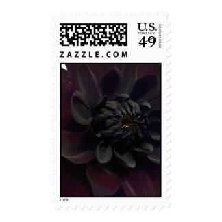 Black Dahlia Postage Stamps