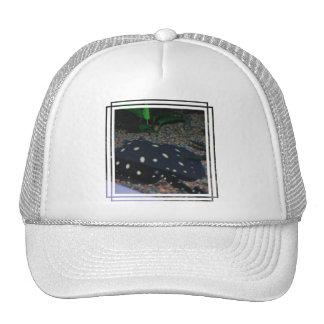 Black Devil Stingray  Baseball Hat