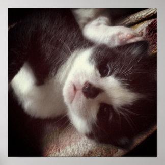 Black Diamond Nose CUTE Kitty Poster