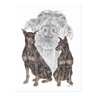 Black Doberman Dogs Postcard