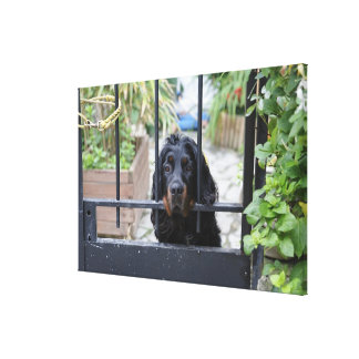 Black Dog Behind the Fence,  Bretagne, France Canvas Print