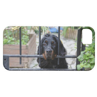 Black Dog Behind the Fence,  Bretagne, France iPhone 5 Covers