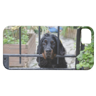Black Dog Behind the Fence,  Bretagne, France iPhone 5 Cover