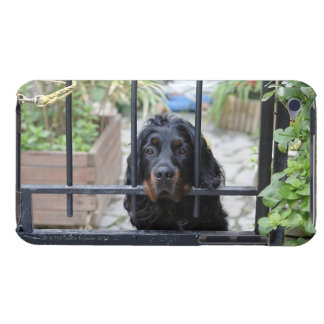 Black Dog Behind the Fence,  Bretagne, France iPod Touch Cover