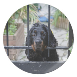 Black Dog Behind the Fence,  Bretagne, France Melamine Plate