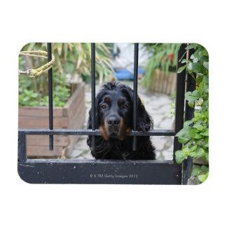 Black Dog Behind the Fence,  Bretagne, France Rectangular Photo Magnet