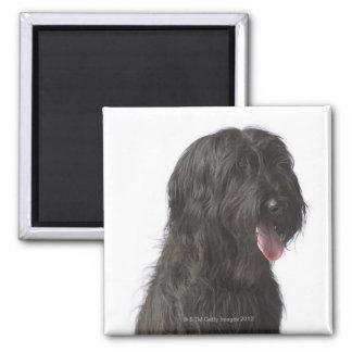Black dog, Briard Magnet