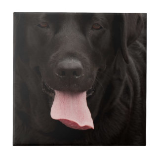 Black dog face small square tile