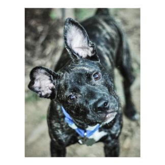 Black dog flyer