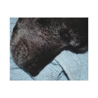 black dog head on blue blanket canine animal pet gallery wrapped canvas