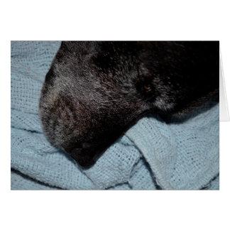 black dog head on blue blanket canine animal pet card