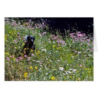 Black Dog in Flowers Card