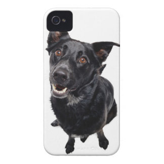 Black Dog iPhone 4 Covers