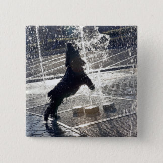 Black dog jumping through fountain on waterside button