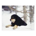Black dog lying in snow postcard